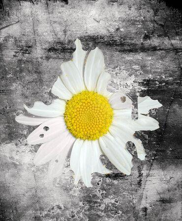 daisy in the asphalt conceptual digital illustration Stock Photo