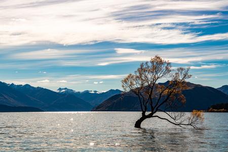 Wanaka Tree at Lake Wanaka Stock Photo