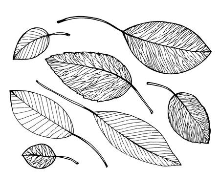 Vogels en bladeren