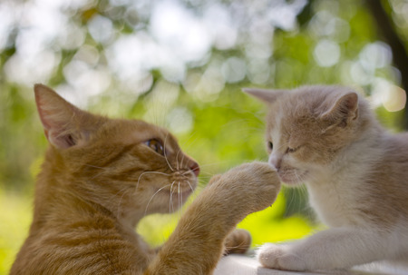 beg: portrait of  cat and a kitten