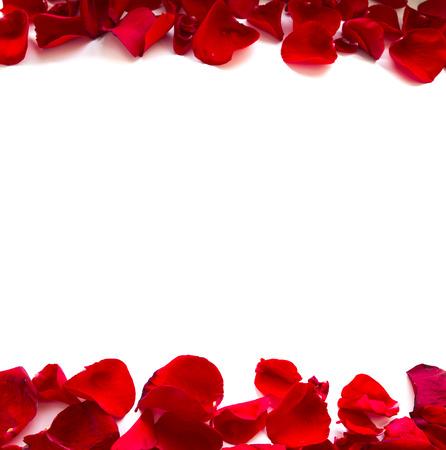 Rose Petals Border Stock Photo