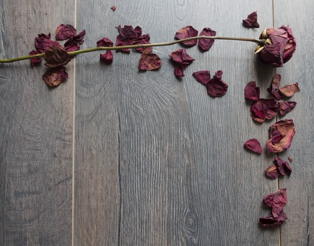 dry rose petals Stock Photo