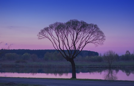 tree and river, sunset
