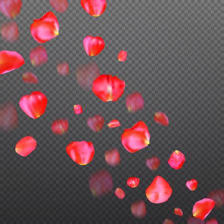 A lot of falling red rose petals on transparent background. Vector illustration.