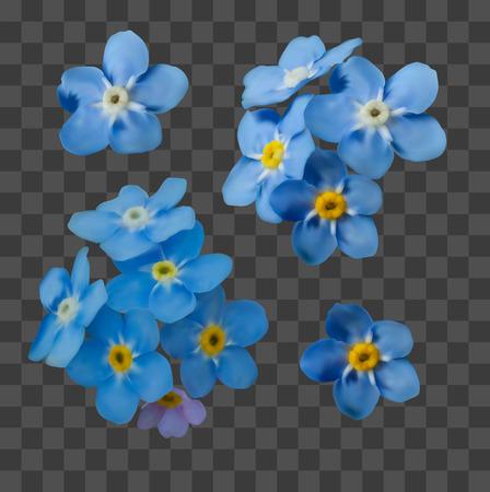 Blu non ti scordar di me fiori di primavera su sfondo trasparente griglia. Macro di realismo fotografico. Elementi decorativi per biglietti di auguri, inviti. Insieme di vettore per il vostro disegno. Vettoriali