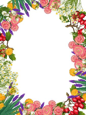 Hand drawn medicinal plant frame. Healing herbs border. isolated on white background. Floral Illustration of hawthorn, pharmacy chamomile, poppy, immortelle calendula Stock Photo