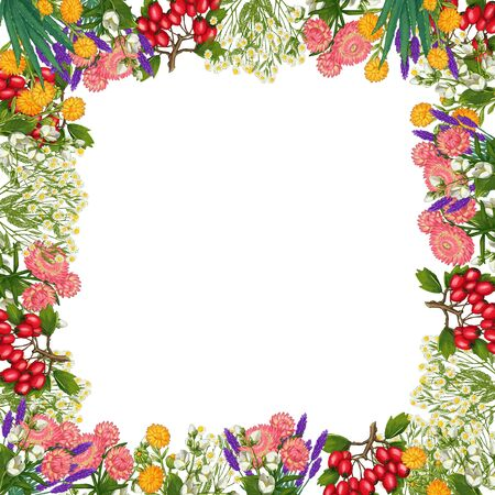 Hand drawn medicinal plant frame. Healing herbs square border. isolated on white background. Floral Illustration of hawthorn, pharmacy chamomile, poppy, immortelle calendula Stock Photo