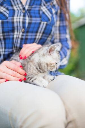 Close up of a cute kitty-cat in the womans hands. Woman stroking her lovely little pet. Outdoor