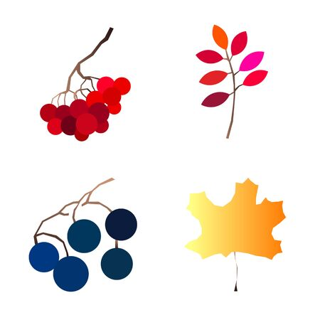 Autumn vector set with berries leaves branches mushrooms and acorns. Seasonal fall collection.