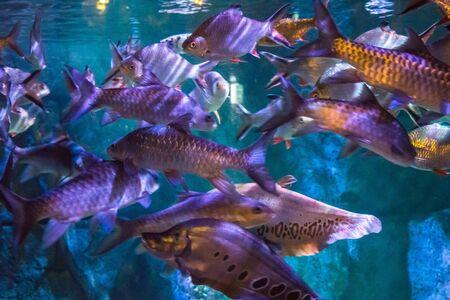 Corals and exotic marine fish. Ocean life. The Oceanarium of Bangkok. Scene under water. Large aquarium. Wild nature. Tropical inhabitants
