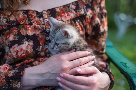 Close up of a cute kitty-cat in the woman's hands. Woman stroking her lovely little pet. Outdoor Stok Fotoğraf