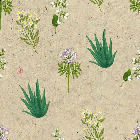 Hand drawn medicinal plant seamless pattern. Healing herbs drawing on craft paper. Illustration of aloe, pharmacy chamomile, valerian,