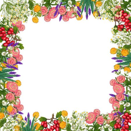 Hand drawn medicinal plant frame. Healing herbs square border. isolated on white background. Floral Illustration of hawthorn, pharmacy chamomile, poppy, immortelle calendula Фото со стока
