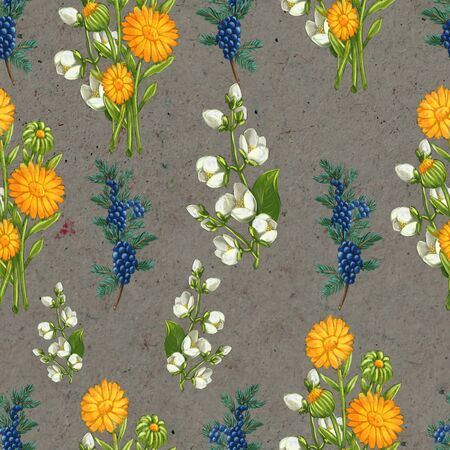 Hand drawn medicinal plant seamless pattern. Healing herbs drawing on craft paper. Illustration of juniper, , calendula and jasmine