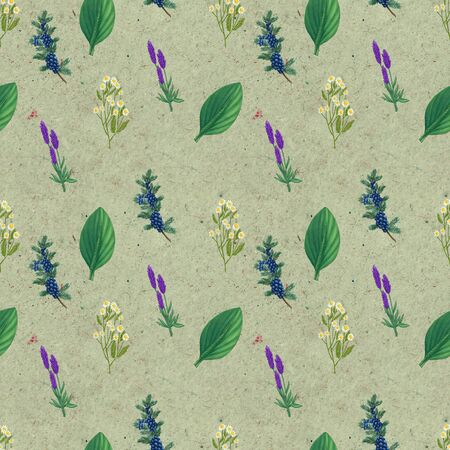 Hand drawn medicinal plant seamless pattern. Healing herbs drawing on craft paper. Illustration of juniper, pharmacy chamomile, plantain lavender Фото со стока