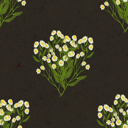 Hand drawn medicinal plant seamless pattern. Healing herbs drawing on black craft paper. Illustration of pharmacy chamomile