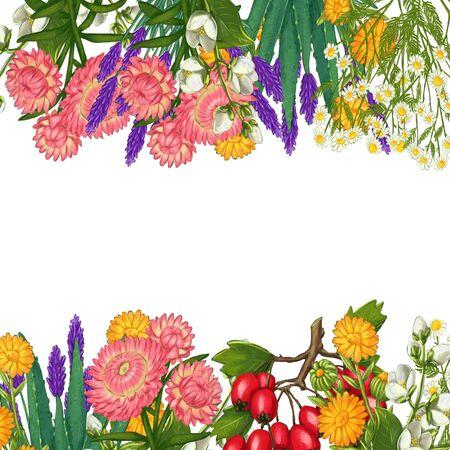 Hand drawn medicinal plant frame. Healing herbs border. isolated on white background. Floral Illustration of hawthorn, pharmacy chamomile, poppy, immortelle calendula Zdjęcie Seryjne