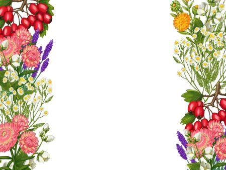 Hand drawn medicinal plant frame. Healing herbs border. isolated on white background. Floral Illustration of hawthorn, pharmacy chamomile, poppy, immortelle calendula 版權商用圖片