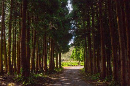 La route dans la forêt près de gruta do Natal dans la municipalité de Praia da Vitoria, sur l'île de Terceira dans l'archipel portugais des Açores.