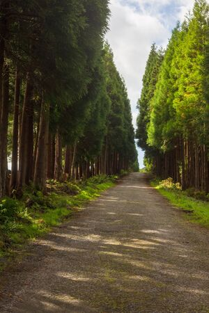 The road in the forest near gruta do Natal in municipality of Praia da Vitoria, on the island of Terceira in Portuguese archipelago of the Azores.