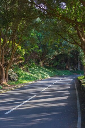 The road in the forest near the observation deck Vigia das Baleias. Terceira, Azores. Portugal