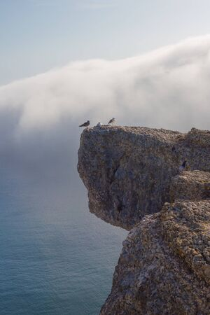Seagull bird standing feet on cliff. Close up view of white gray bird sitting in sea rock beach.