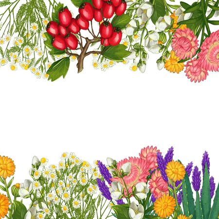 Hand drawn medicinal plant frame. Healing herbs border. isolated on white background. Floral Illustration of hawthorn, pharmacy chamomile, poppy, immortelle calendula Standard-Bild