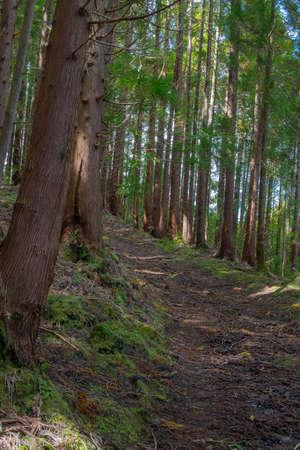 Hiking trail near gruta do Natal in municipality of Praia da Vitoria, on the island of Terceira in Portuguese archipelago of the Azores.
