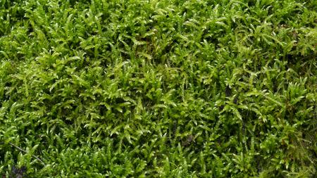 a green moss grass texture Stockfoto