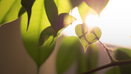 heart shaped leaf surrounded by other leaves with sunlight hitting it from behind