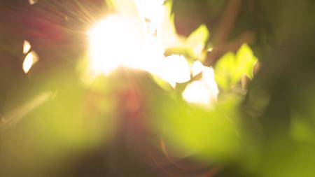 Abstract vervagen achtergrond zonneschijn schijnt door bladeren met groene en oranje kleuren Stockfoto - 93506558
