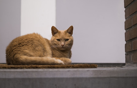 a orange cat laying with a white and gray concrete background laying on a doormat looking towards he camera
