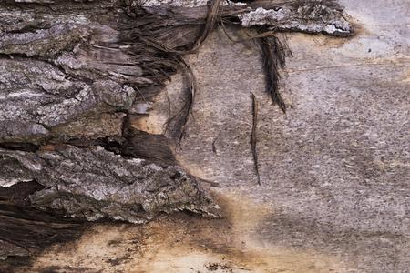a grungy light wood bark texture