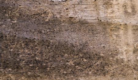 Een grungy lichte houtschors textuur Stockfoto - 93563477