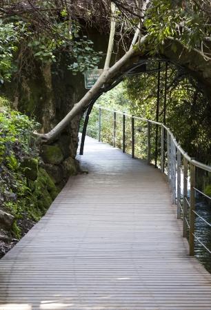 banias: Bridge along the river Banias Nature Reserve