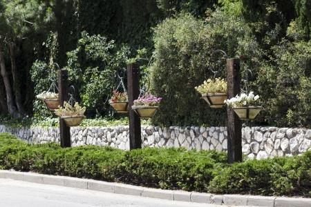 haifa: Urban Flowers Haifa