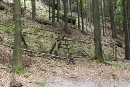 czech switzerland: foresta nella Repubblica Svizzera Archivio Fotografico