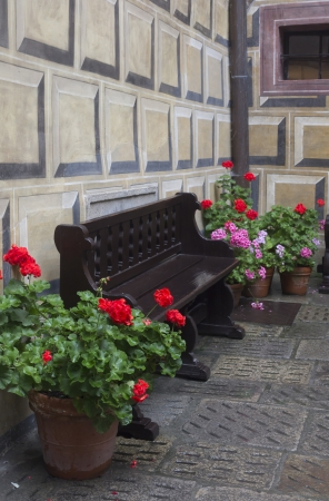 wooden bench and flowers in a pot photo