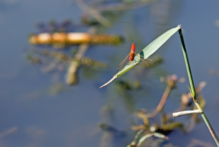 red dragonfly sitting on a branch photo