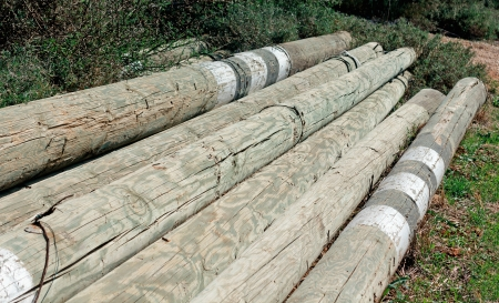 primary product: stacked timber camouflaged in nature