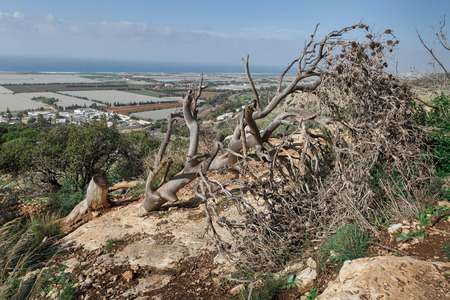 nature conservancy: cut down a tree on the hillside Stock Photo