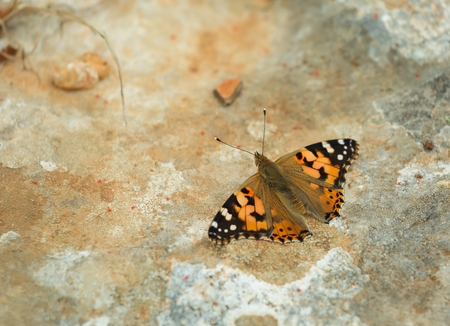 nymphalis: Urticaria Butterfly on the background of stone