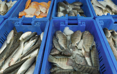 fishery products: Different fish in boxes on the market