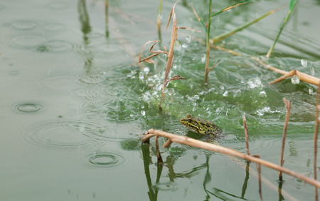 beautiful green frog on the lake Stock Photo