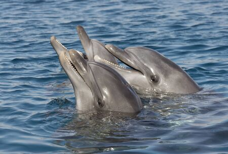 beautiful dolphins in the Gulf of Eilat