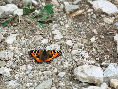 beautiful butterfly on the rocks
