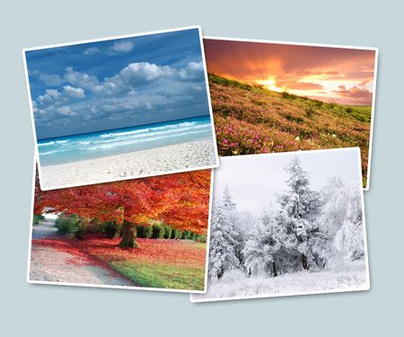 four leaf: Four seasons of year on one picture