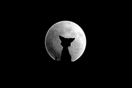 dog ear: Black silhouette of a cat which sits under the moon