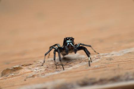 eight legs: Spiders Stock Photo