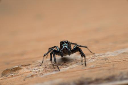 spiders: Spiders Stock Photo